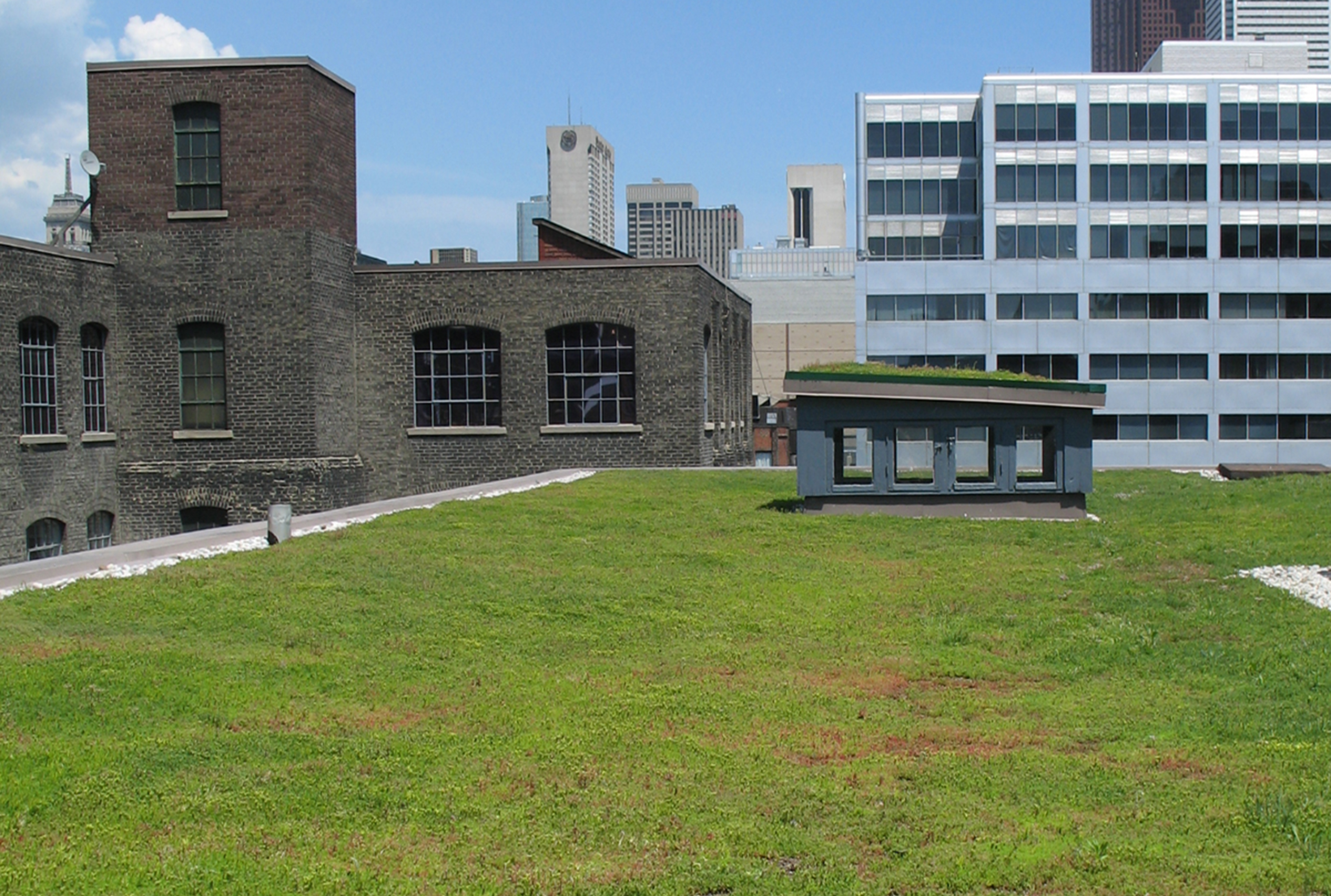 Extensive Green Roof At 401 Richmond Part 97